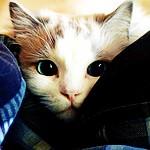 smallcat366