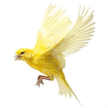 smallpeacock569