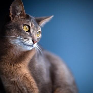 beautifulcat965
