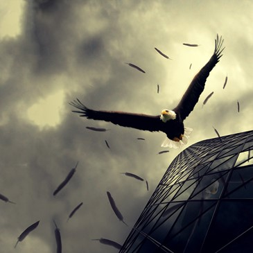 crazybird648