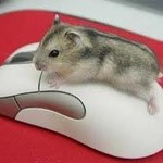 goldenmouse804